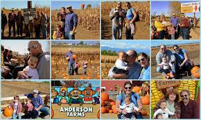 Pumpkin Patch In Colorado Springs Co 2013 by Mille Fiori Favoriti Pumpkin Picking At Anderson Farms In Erie