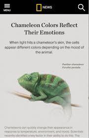 Basking Lamp For Chameleon by 41 Best Chameleons Supplies Images On Pinterest Chameleons