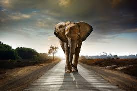 elefant fototapete dschungel tier tapete kinder wohnzimmer foto inneneinrichtungen