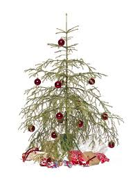 Xmas Tree Waterer by Best 25 Christmas Tree Watering System Ideas On Pinterest