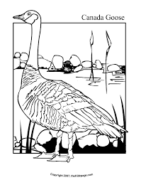 Canada Goose Free Coloring Pages For Kids Printable Colouring