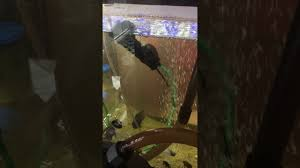 pompe a chaleur aquarium pompe à air pour aquarium air kit