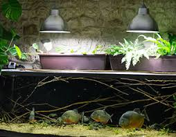 pompe a chaleur aquarium maintenance d un aquarium à piranhas