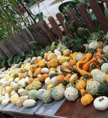 Best Pumpkin Patch Des Moines by Journal U0026 Courier