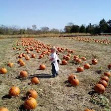 Pumpkin Patch Caledonia Il For Sale by 14 Great Mississippi Pumpkin Patches To Check Out This Fall