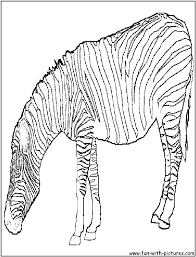 Fat Zebra Coloring Page