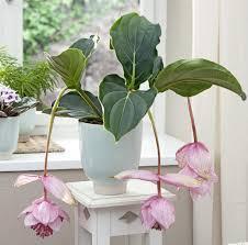 plante verte dans une chambre à coucher plante verte pour pia ce la maison femmes plantes depolluantes