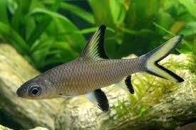 aquarium poisson prix poissons exotiques vente magasin uniquement poissons divers