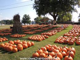 Norms Pumpkin Patch 2015 by From Roses To Rainbows September 2015