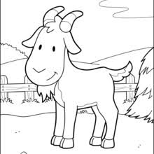 FARM ANIMAL Coloring Pages Sweet Pig Smiling Goat