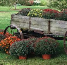 Rustic Wagon Filled With Hardy Fall Mums FlowersFlowers GardenFall