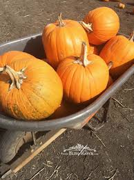 Half Moon Bay Pumpkin Patches 2015 by Bliss Ranch Visiting Half Moon Bay California