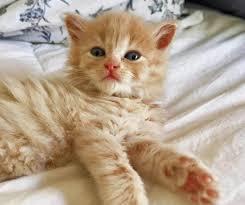 orange cat names 50 cat names for cat kitten cat