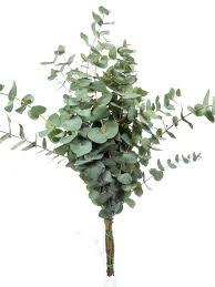 frische bindegrün und blühendes beiwerk pflanzen trockene