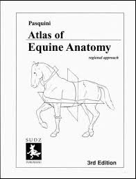 The Anatomy Coloring Book 3rd Edition Atlas Equine Abebooks