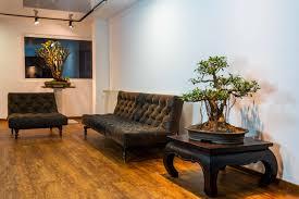 living arts goldstadt bonsai in pforzheim