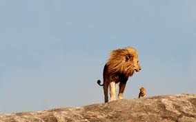 A Lion And Cub Standing Together Fearless Wallpaper