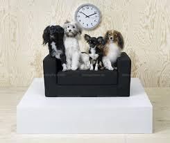 canap pour chien monde ikea se lance dans les meubles pour chiens et chats