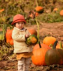 Lakeview Pumpkin Patch by 10 Great Fall Farm Experiences In The Baltimore Area Baltimore Sun