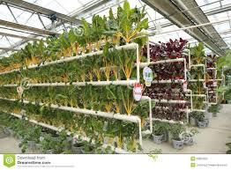 Soilless Cultivation Vegetables - Download From Over 29 Million ... Collection Picture Of A Green House Photos Free Home Designs Best 25 Greenhouse Ideas On Pinterest Solarium Room Trending Build A Diy Amazoncom Choice Products Sky1917 Walkin Tunnel The 10 Greenhouse Kits For Chemical Food Sre Small Greenhouse Backyard Christmas Ideas Residential Greenhouses Pool Cover 3 Ways To Heat Your For This Winter Pinteres Top 20 Ipirations And Their Costs Diy Design Latest Decor