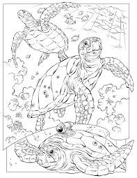 Ocean Animal Coloring Pages For Kids
