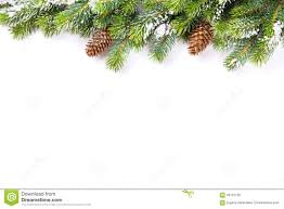 Christmas Tree Branch With Snow And Pine Cones Stock Image