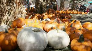 Pumpkin Patch Irvine Park Hours by 5 Reasons We Love Irvine Park Railroad Pumpkin Patch