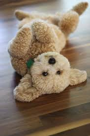 Do Cockapoo Mixes Shed by Best 25 Toy Cockapoo Ideas On Pinterest Toy Maltipoo Toy