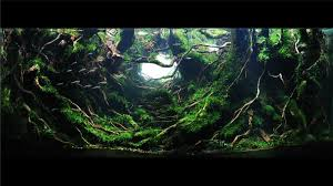 2017 IIAC Aquascaping Contest The Green Machine Aquascaping Shop Aquarium Plants Supplies Photo Collection Aquascape 219 Wallpaper F Amp 252r Of The Month October 2009 Little Hill Wallpapers Aquarium Beautify Your Home With Unique Designs Design Layout New Suitable Plants Aquariums Pinterest Pics Truly Inspired Kinds Ornamental Aquascaping Martino Agostini Timelapse Larbre En Mousse Hd Youtube Beauty Of Inside Water Garden Inspirationseekcom Grass Flowers Beautiful Background