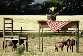 Horses Take Shade Under Giant Table Chair Editorial Stock ...