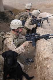 Mouser Cabinets Pay Scale by 92 Best Military Pets Images On Pinterest Military Dogs