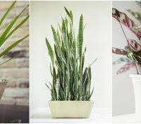 Plants In Bathroom Good For Feng Shui by House Plant Humidifier Bathroom Good Plants For Fresh And Dramatic