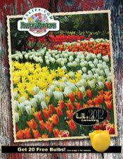 click here for your free flower bulb catalog from tulips for