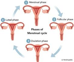 shedding uterine lining before period during menstruation why doesn t the entire uterine lining shed at