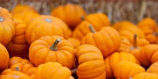 Pumpkin Patch Farm Temecula by 28 Temecula Pumpkin Patch 2015 Traditional Temecula Pumpkin