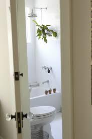 Best Bathroom Pot Plants by 5 Favorites Houseplants For The Bath Gardenista