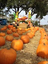 Flower Mound Pumpkin Patch Flower Mound Tx by Flower Mound Pumpkin Patch Home Facebook