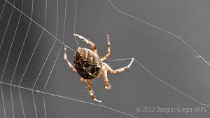 l araignée accorde sa toile comme les cordes d une guitare