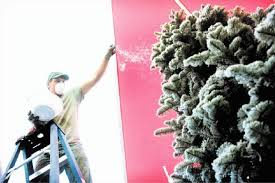 Snow Flocking For Christmas Trees by Shopping For Live Flocked Christmas Trees W Victoria