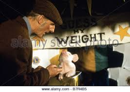 cromwell the pig 1995 stock photo royalty free