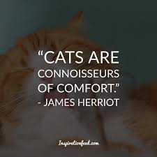 cat quotes 40 cat facts and quotes even owners will inspirationfeed