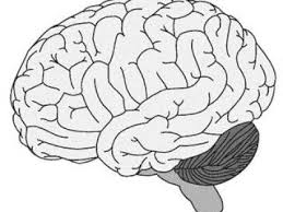 Brain Coloring Page Download Free Wide Range Of
