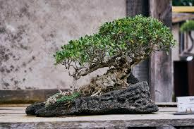 bonsai werkstatt the dorf