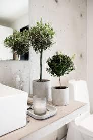 olivenbaum bei der home finca hermosa