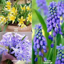 6 flower bulbs garden plants flowers the home depot