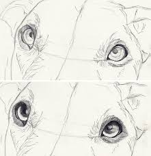How To Draw Dog Eyes Step By