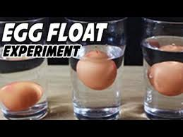 egg floating in saltwater experiment youtube