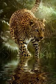18 best Jaguars images on Pinterest