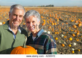 Pumpkin Picking Near Lancaster Pa by Fall Scenery At A Pumpkin Patch Stock Photo Royalty Free Image