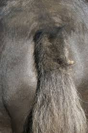 32 Best Equine Parasites Images On Pinterest   Horse Care, Horse ... Defeat The Enemy Fly Control Options For Horse And Barn Music Calms Horses Emotional State The 1 Resource Breyer Crazy In At Schneider Saddlery Horsedvm Controlling Populations Around Oftforgotten Bot Equine Dry Lot Shelter Size Recommendations Successful Boarding Your Expert Advice On Horse 407 Best Barns Images Pinterest Dream Barn Barns A Management Necessity Owners Beat Barnsour Blues Care Predator Wasps Farm Boost Flycontrol Strategies Howto English Riders
